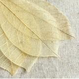 Листья, Тычинки, Мох