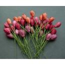 Тюльпан, красный микс, 5 шт