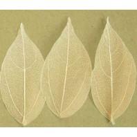 Скелетированные листья, цвет - натуральный, 10 шт